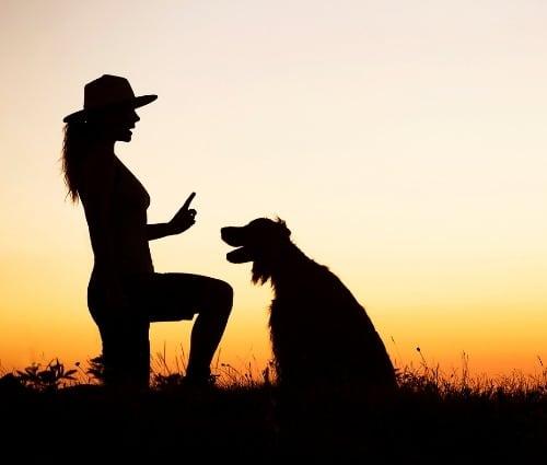 formation animaux en ligne